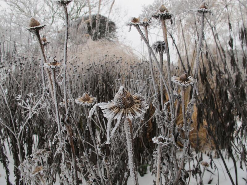 IMG_0026 (winter)