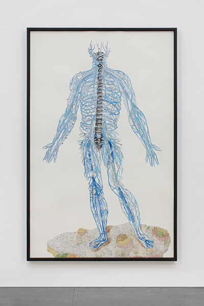 JADAY51976 Anatomical Drawing (Seas/Oceans = Nervous System)