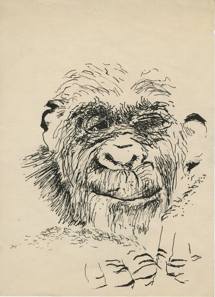 PMC_PMCC53_PMC.919_Gorilla self portrait.jpg