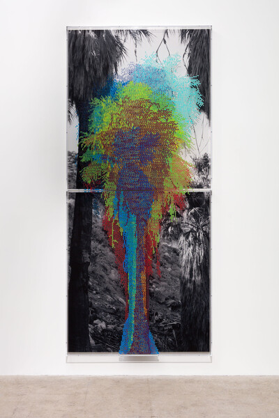 FIG. 2 'Numbers and Trees: Palm Canyon, Palm Trees Series 2, Tree #9, Kawaiisu,' 2019. Acrylic sheet, acrylic paint, and photograph, 2 parts: 145 x 64 x 5 3/4 in. (368.3 x 162.6 x 14.6 cm) overall. Photo: Fredrik Nilsen
